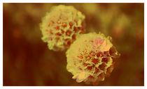 Flower1-copy