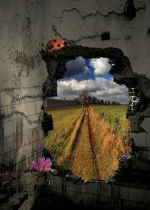 The nature hole by Julie Aleksovska