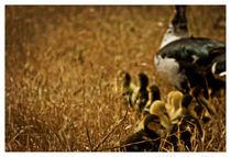 Duck-copy
