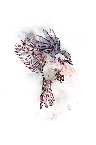 Quot Bird In Flight 1 Quot Drawing Art Prints And Posters By Mike