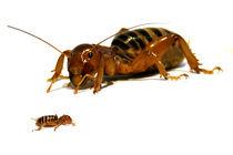 Insekten - Nahaufnahme - Poster - Makro by Jens Berger
