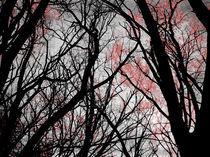 Dark Spring von lucas avalo