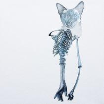 Siamese Janglyarms von Rachel Meuler