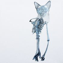 Siamese Janglyarms by Rachel Meuler