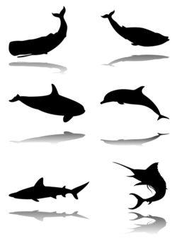 Set-of-marine-animals