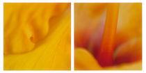 hibiscus  by Priska  Wettstein