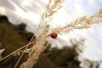 Ladybug by Nadine Amende