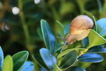 A snails journey by Nadine Amende