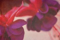 Fuchsia von Angela Bruno