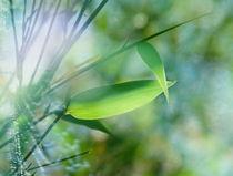 bamboo colours von Franziska Rullert