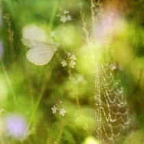 morning dew von Franziska Rullert