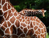 Giraffen von buellom