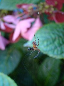Spinnenmahlzeit von Ka Wegner