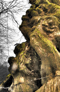 The old tree 2 by Arnaud Charbonnel