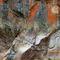 Diggles-w-poudrecanyonpanorama