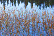 Grass and Water by Colorado Images