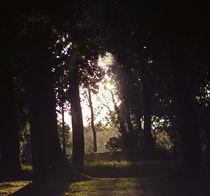 Tree Ray Light by Carlos Lopez