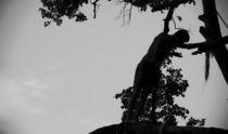 Treeclimbing by Fabrizio Di Salvio