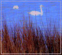 Swans by Maks Erlikh