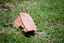 Fallen Leaf von ys7ven