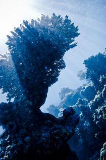 Riff unter Wasser by Andy Fox