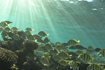 Fische am Riff unter Wasser by Andy Fox