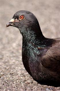 Pigeon Portrait von Lubelle Uden