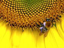 Sunflowerbeeopt