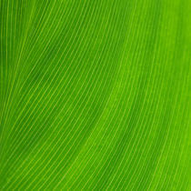 Green Square von Igor Mazulev