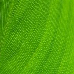 0807-green-square-b-nologo