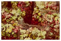 corn in plastic by Andreia Costa