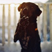 Doggy-by-infin1tyez-d36v9qx