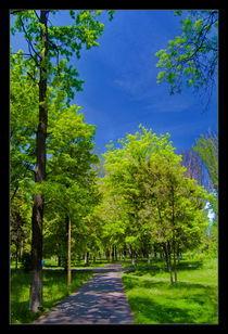 Park alley by Alexandru Busuioc