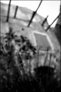 Foggy Memories 9 by Marin Drazancic