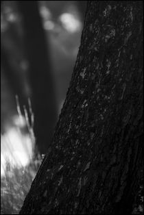Foggy Memories 7 von Marin Drazancic