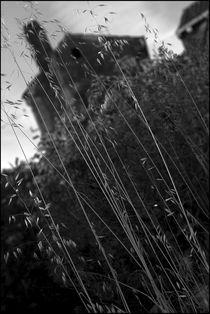 Foggy Memories 6 by Marin Drazancic