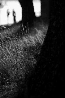 Foggy Memories 5 by Marin Drazancic