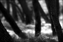 Foggy Memories 3 von Marin Drazancic
