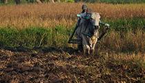 Farmers Indonesia von Indra Raharyanto