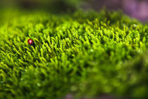 Ladybug by Jaanus Jagomägi