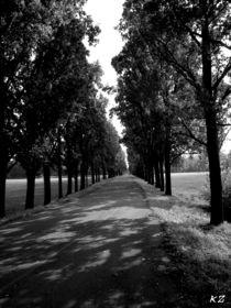 Monza, park street von Katia Zaccaria-Cowan