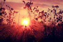 Floral Heaven von Jonas Kontautas