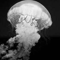 Jellyfish IV by Joaquin Novak-Zarate