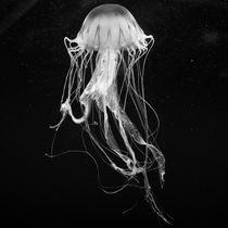 Jellyfish III by Joaquin Novak-Zarate