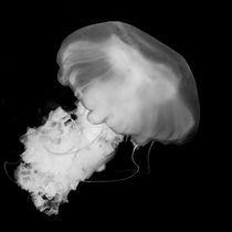 Jellyfish II by Joaquin Novak-Zarate