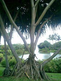 Derooting-tree-by-jenesisphotography