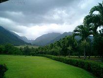 Green-plantation-by-jenesisphotography