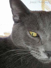 Kitty-by-jenesisphotography