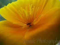 Pollen-haven-by-jenesisphotography