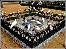 Doves in fountain of Seville by Maks Erlikh
